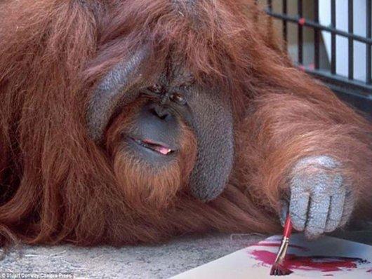 Orangotango que aprendeu a língua dos sinais morre aos 39 anos