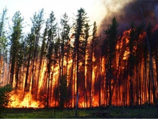 Cientistas alertam sobre o 'horrendo futuro de extinções em massa' e sobre as rupturas climáticas.